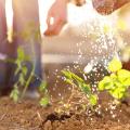 garden therapy dubai